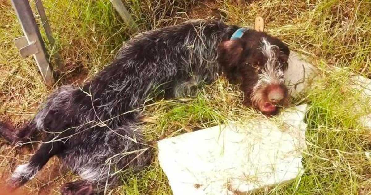 κακοποίηση σκύλου αποκατάσταση αγάπη των ανθρώπων