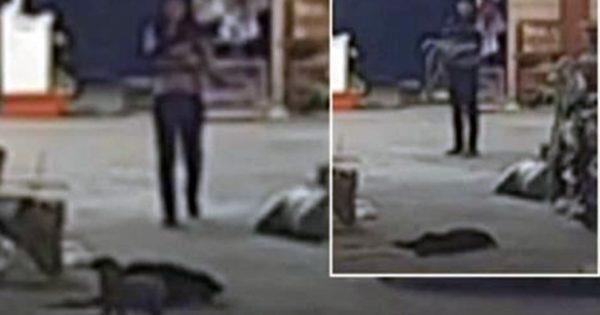 Δηλητηριασμένο σκυλί τρέχει σπίτι για να αποχαιρετήσει τους ιδιοκτήτες του λίγο πριν ξεψυχήσει