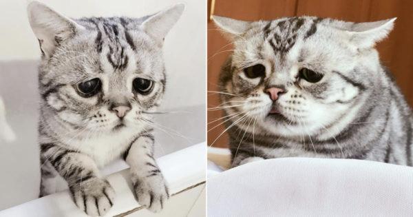Αυτή είναι η πιο λυπημένη γάτα του κόσμου! Τα μονίμως θλιμμένα μάτια της, θα σας ραγίσουν την καρδιά…