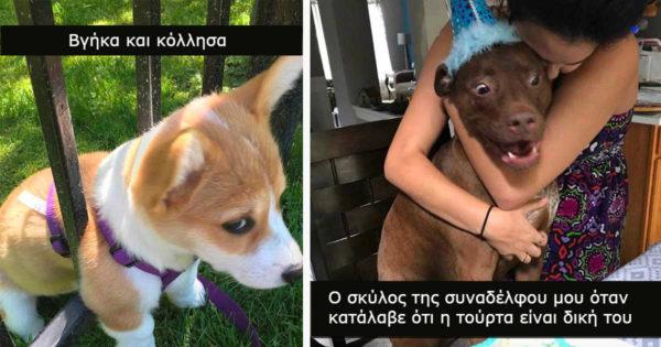 Μέχρι τώρα κανείς δεν έχει καταφέρει να δει ΑΥΤΕΣ τις 31 φωτογραφίες σκύλων χωρίς να κλάψει στο γέλιο. Εσύ θα μπορέσεις;