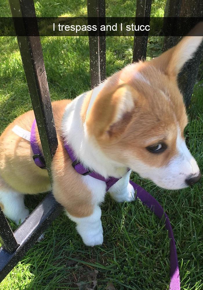 φωτογραφίες σκύλοι σκυλάκια