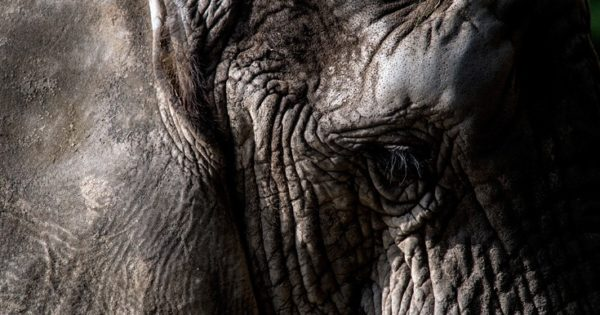 Ποιο είναι το βαρύτερο και ποιο το ελαφρύτερο ζώο του κόσμου;