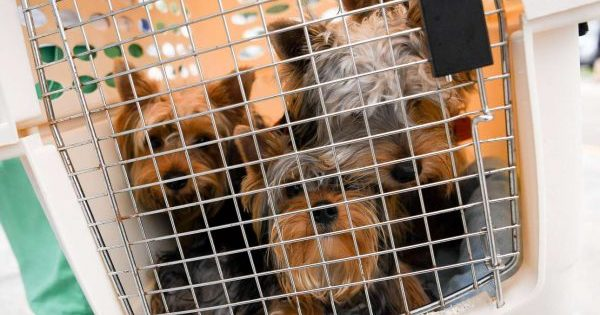 Φύλαξη ζώων ενόψει τυφώνα Irma