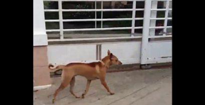 Βίντεο: Προσοχή σκύλος!