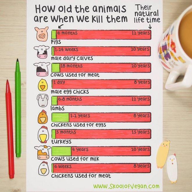 σε τι ηλικία σκοτώνουν τα ζώα που τρώμε ζώα