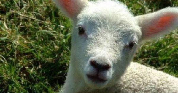 Στο εδώλιο ο ιδιοκτήτης ζωολογικού κήπου στην Πάτρα που βασάνιζε και θανάτωνε ζώα