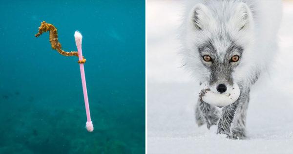 Oι 13 καλύτερες φωτογραφίες άγριας ζωής για το 2017 ανακοινώθηκαν και είναι εκθαμβωτικές