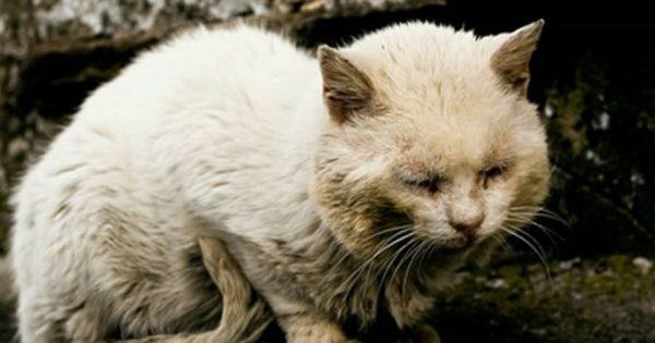 Επιτέλους: Βαριές ποινές σε βασανιστές αθώων ζώων
