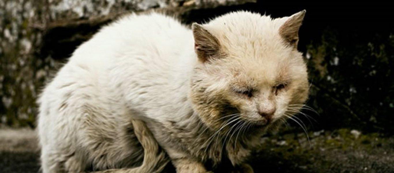 ποινές κακοποίηση ζώων