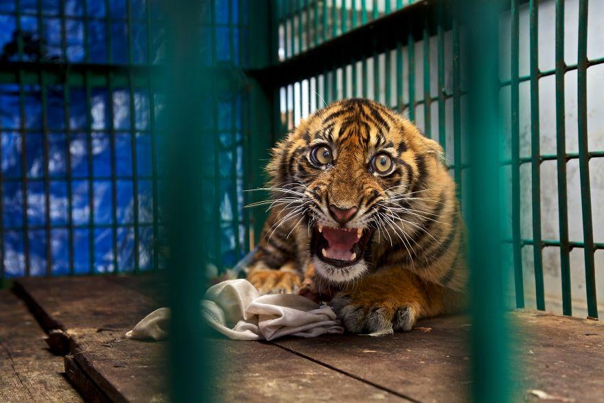ψάρια φωτογραφίες ζώων Τίγρης ιππόκαμπος ζώα γάτες Άγρια Ζωή