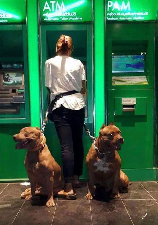 φωτογραφίες Σκύλος σκύλοι ατμ ανάληψη ατμ