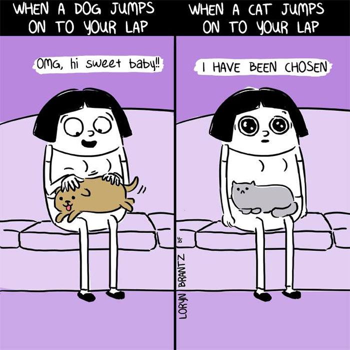 Σκύλος διαφορές σκύλου γάτας Γάτα