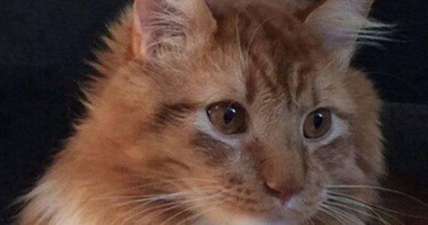Έχει τρελάνει το διαδίκτυο! Είναι μισή γάτα και … μισή κότα;