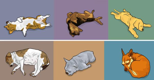 Η στάση ύπνου του σκύλου σας εξηγεί πολλά γι'αυτόν ! Δείτε 6 στάσεις ύπνου και πως ερμηνεύονται