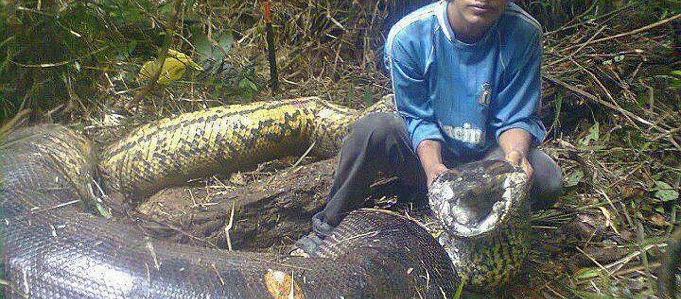 φίδια μεγαλύτερα φίδια