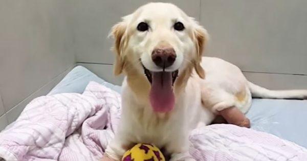 Βρέθηκε ταλαιπωρημένο μέσα σε κάδο απορριμάτων – Τώρα χαίρεται τη ζωή!