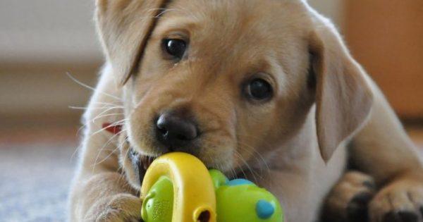 9 μύθοι για τους σκύλους που δεν πρέπει να πιστεύουμε!