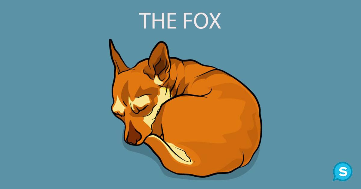 στάσεις ύπνου σκύλων σκύλος και ύπνος σκύλοι πως κοιμάται ο σκύλος σας γιατί κοιμάται έτσι ο σκύλος μου