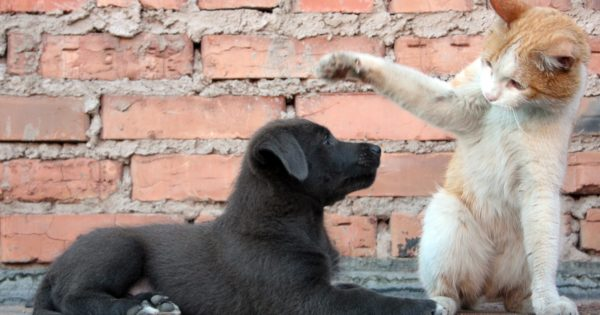 Είναι οι Έλληνες ένας λαός που αγαπάει τα ζώα;