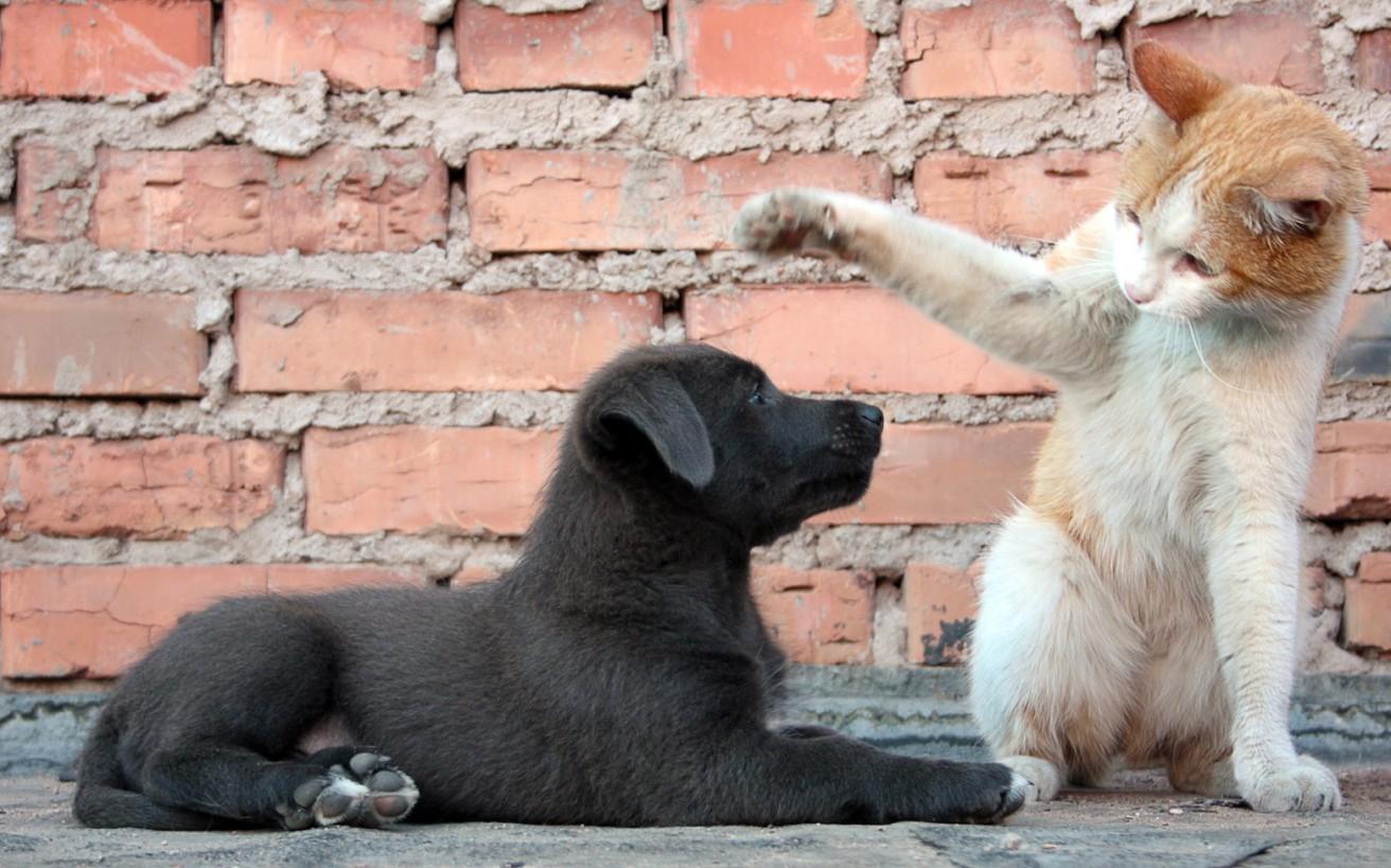 κακοποίηση ζώων Ελλάδα