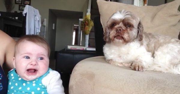 Απίθανος μπέμπης προσπαθεί να μιλήσει στο σκυλάκι ενώ η μαμά τραβάει βίντεο. Αυτό που κατέγραψε; Θα σας φτιάξει τη μέρα!