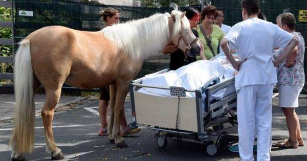 ΣΥΓΚΙΝΗΣΗ : Ετοιμοθάνατη πραγματοποιήσε την τελευταία της επιθυμία ,να χαϊδέψει το άλογο της pics
