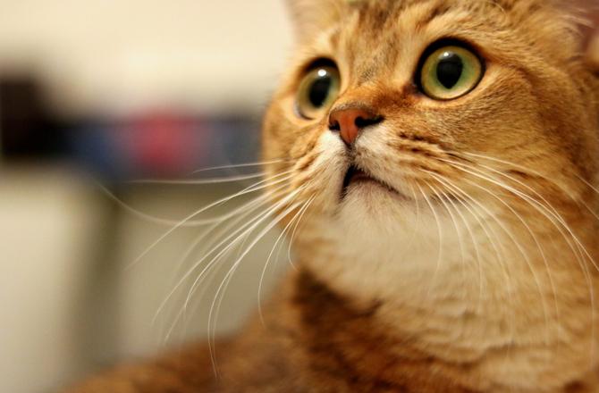 γάτα συμβίωση Γάτα