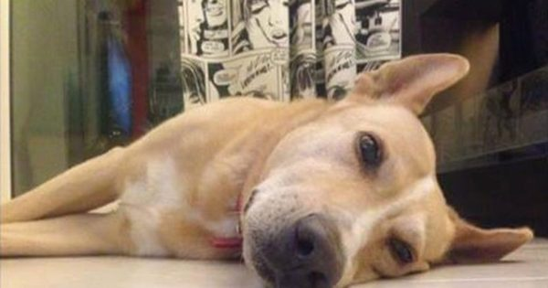 Εισπνεόμενη φόλα: Μια σταγόνα είναι αρκετή για να σκοτώσει ένα σκυλί. Πώς πρέπει να το αντιμετωπίσουμε!