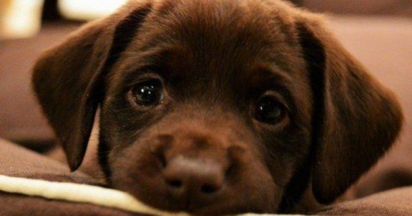 Αποκάλυψη τώρα: Οι σκύλοι χρησιμοποιούν επίτηδες το ύφος «θλιμμένο κουτάβι» για να μας… ρίχνουν!