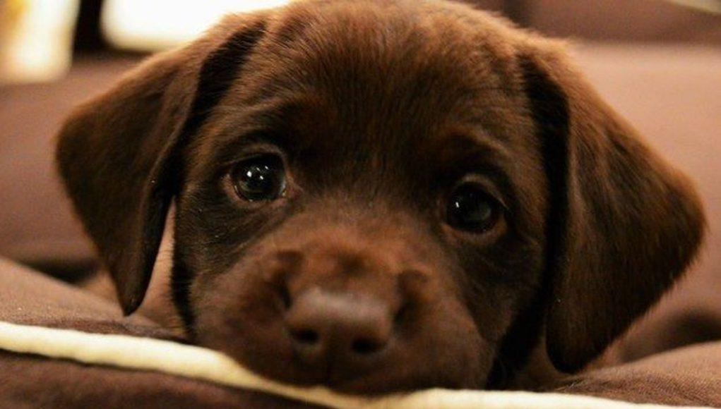 οι-σκύλοι-χρησιμοποιούν-επίτηδες-το-ύφος-θλιμμένο-κουτάβι-mediamagazine.gr_-1021x580