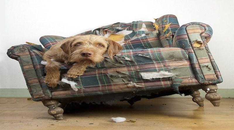 σκύλος καθάρισμα Σκύλος καθάρισμα σπιτιού με σκύλου καθάρισμα