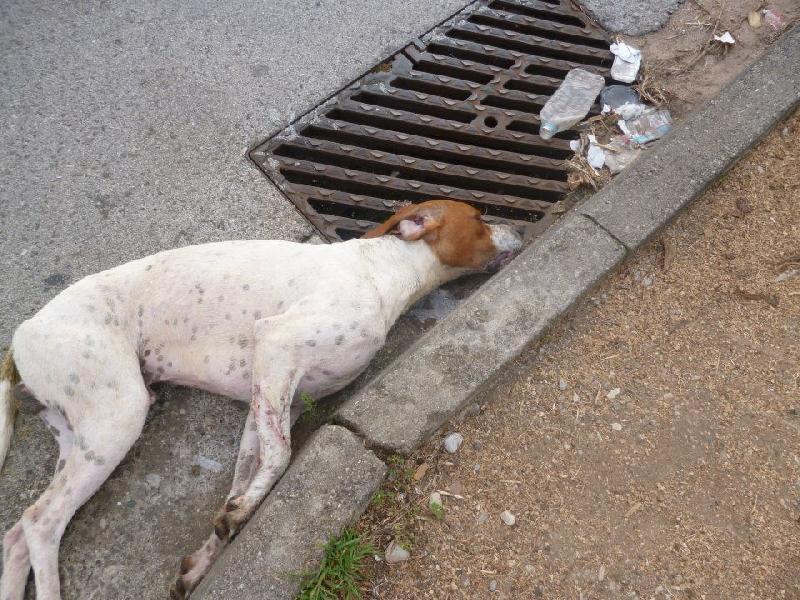 f6d10fcdd412 Νεκρά από φόλες 10 αδέσποτες γάτες και σκύλοι στο κέντρο της Λάρισας ...