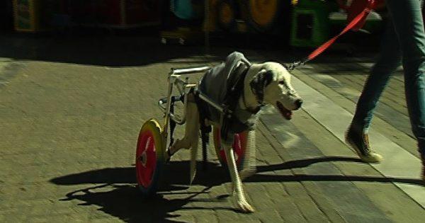 Ο Λαρισαίος που βοηθά τα ζώα να περπατήσουν ξανά