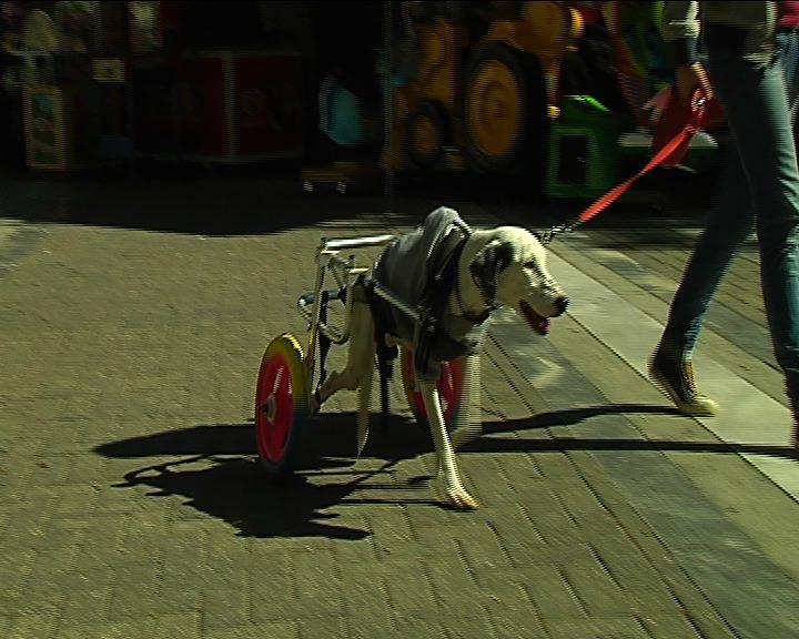 βοηθάει τα ζώα να περπατήσουν
