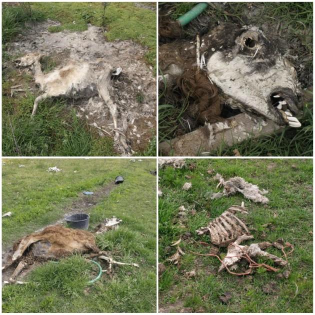 Πάτρα Νεκρά ζώα δίκη για νεκρά ζώα δίκη