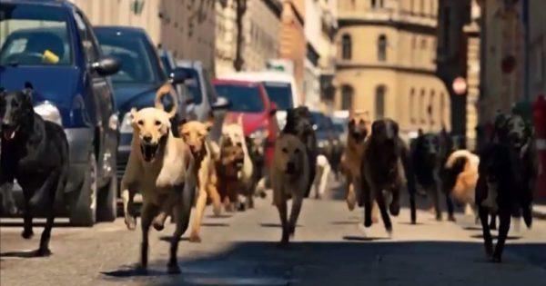 «Ανοίξτε την αγκαλιά σας…» Μοναδική γιορτή αγάπης για τα ζώα από την Ζωοφιλική Ένωση Ηλιούπολης (video)