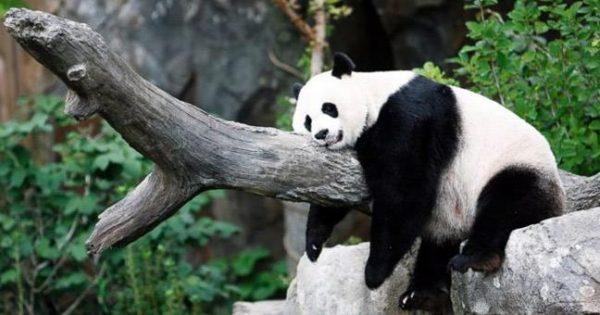 10 παράξενες πληροφορίες για το ζωικό βασίλειο
