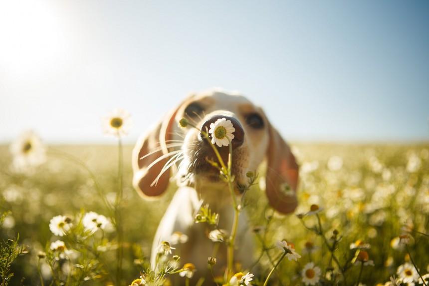 φψτογραφίες σκύλοι Kennel Club