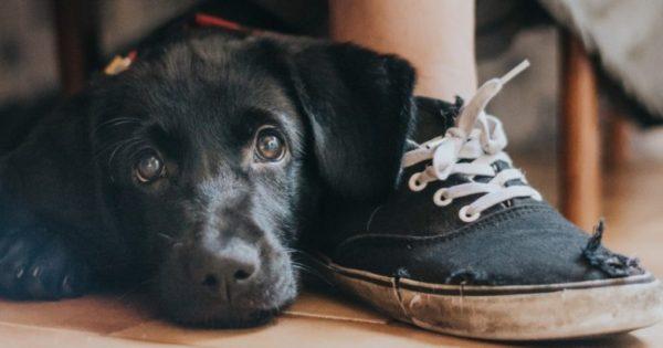 Aυτές είναι οι ωραιότερες φωτογραφίες σκύλων