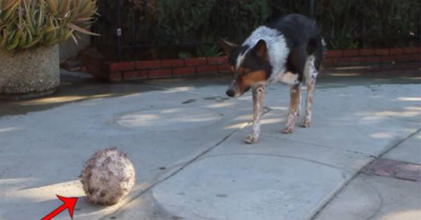 Σκύλος έξυπνος σκύλος