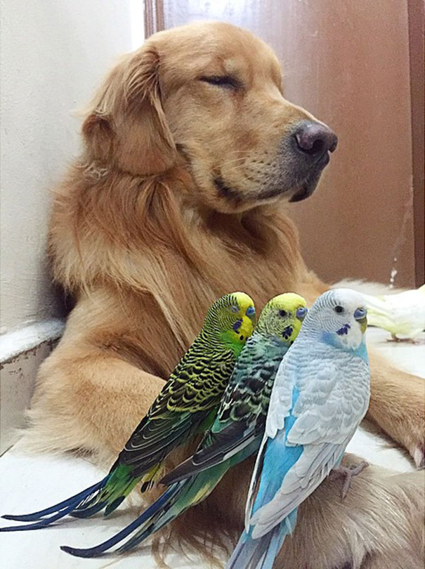 κατοικίδια φίλοι