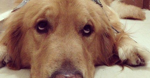 Ένας σκύλος, 8 πουλιά και ένα χάμστερ είναι πιο ασυνήθιστοι καλύτεροι φίλοι του κόσμου!