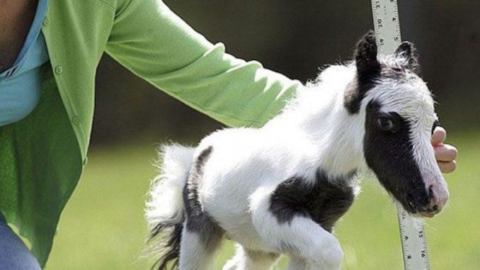 Μίνι αλογάκια: Μπορεί να είναι μικρά αλλά έχουν μεγάλη καρδιά!