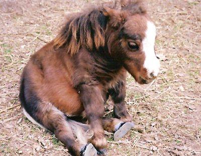 αλογάκια φωτογραφίες αλογάκια άλογα