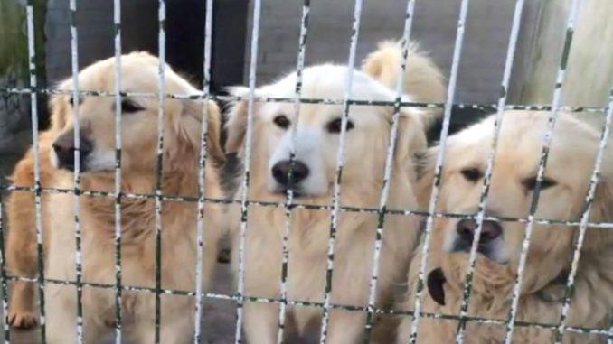 φυλακισμένα σκυλιά σκυλιά