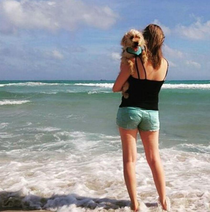 σκύλος ταξίδια Σκύλος αδέσποτο ταξίδι