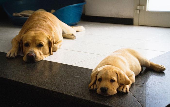 σκύλοι με τους γονείς του σκύλοι γονείς σκύλοι