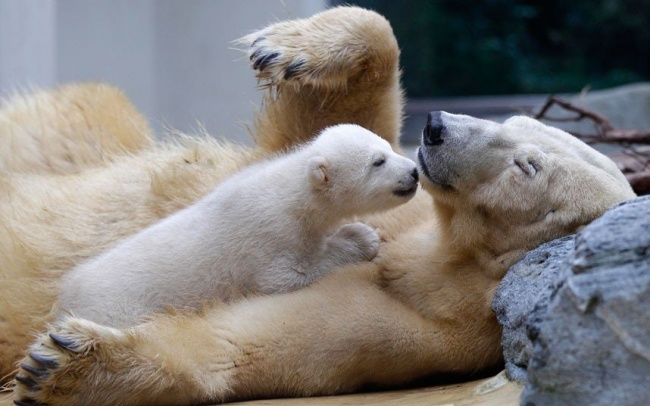μωρά ζώων ζωϊκό βασίλειο ζώα