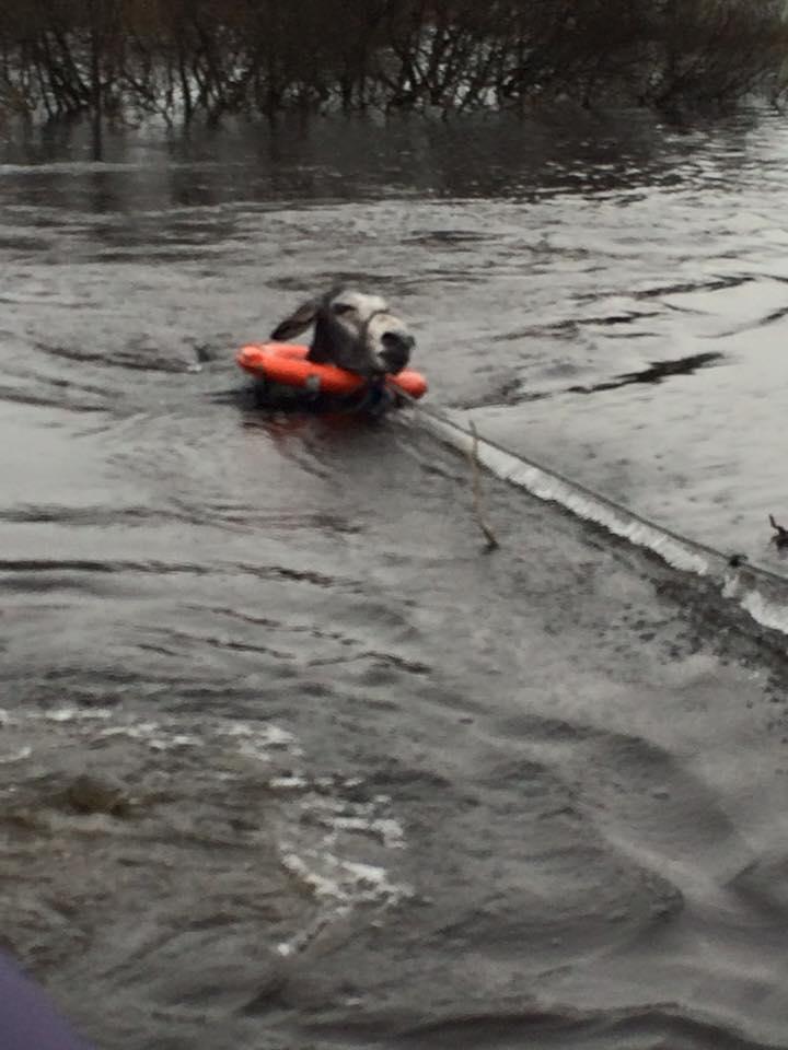 Είδαν ένα γαϊδουράκι να πνίγεται μέσα στο ποτάμι και του έσωσαν τη ζωή. Ο τρόπος που τους ευχαρίστησε; ΣΥΓΚΛΟΝΙΣΤΙΚΟΣ..! γαϊδουράκι