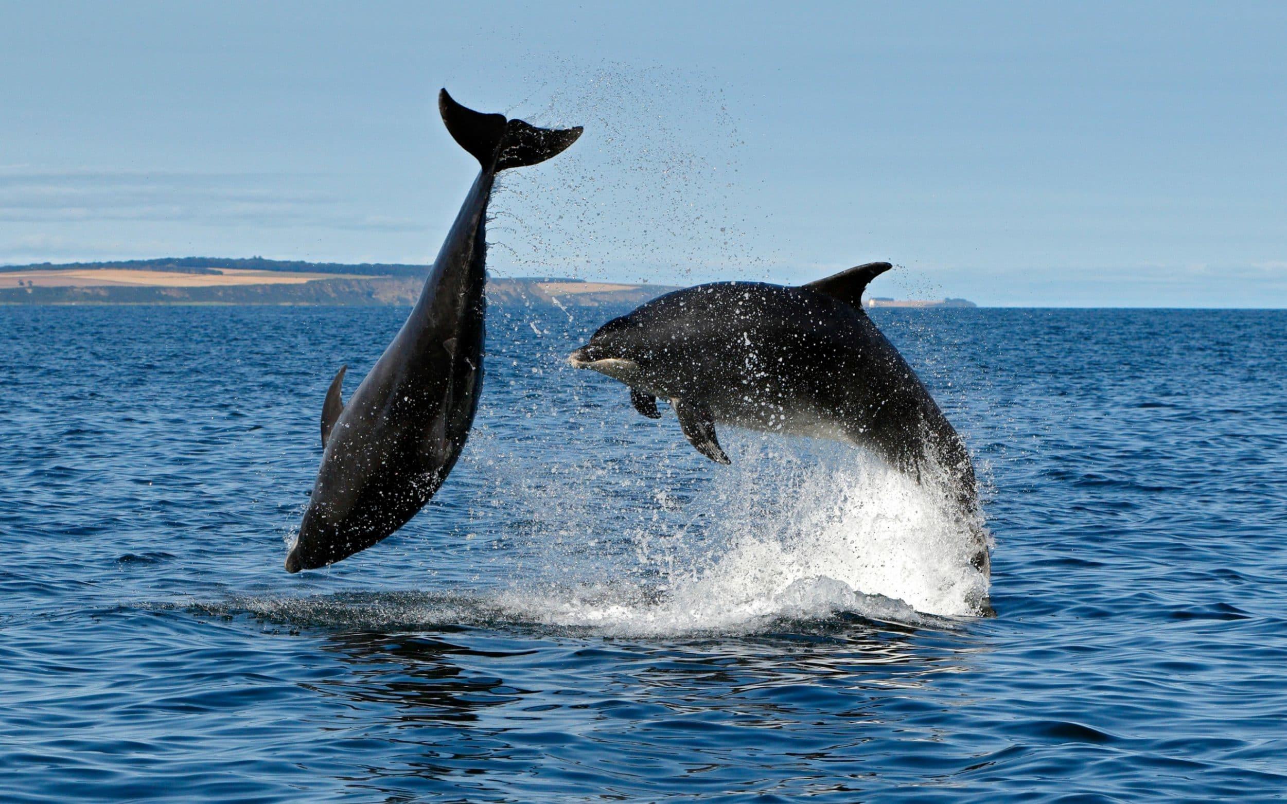 φάλαινες δελφίνια